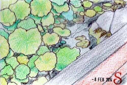 第18回絵日記「蓮」